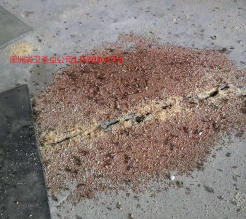 深圳螞蟻防治公司